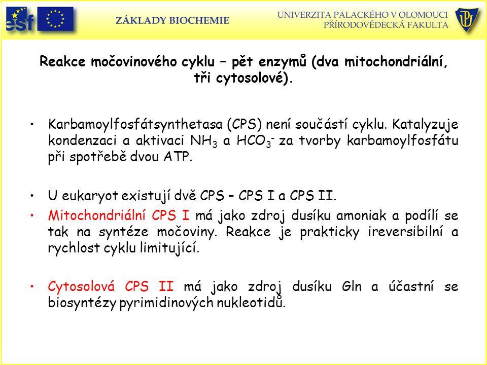 Reakce močovinového cyklu – pět enzymů (dva mitochondriální, tři cytosolové). Karbamoylfosfátsynthetasa (CPS) není součástí cyklu. Katalyzuje kondenza