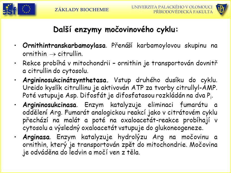 Další enzymy močovinového cyklu: Ornithintranskarbamoylasa. Přenáší karbamoylovou skupinu na ornithin  citrullin. Rekce probíhá v mitochondrii – orni