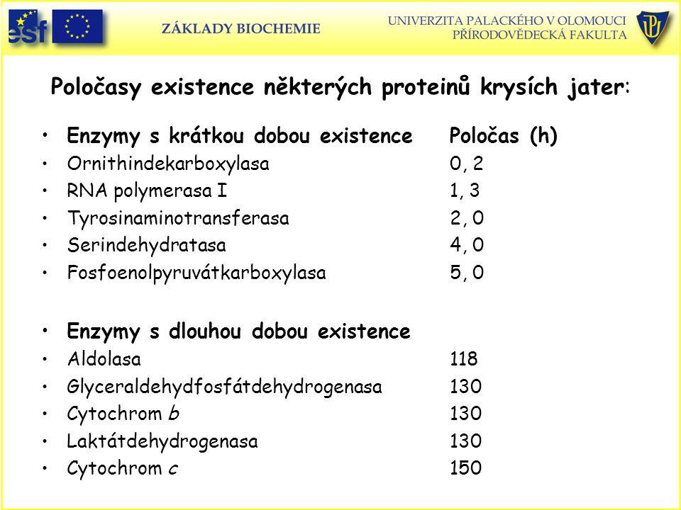 Poločasy existence některých proteinů krysích jater: Enzymy s krátkou dobou existencePoločas (h) Ornithindekarboxylasa0, 2 RNA polymerasa I1, 3 Tyrosi