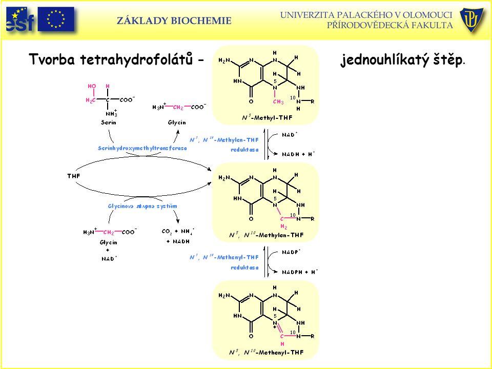Tvorba tetrahydrofolátů - jednouhlíkatý štěp.