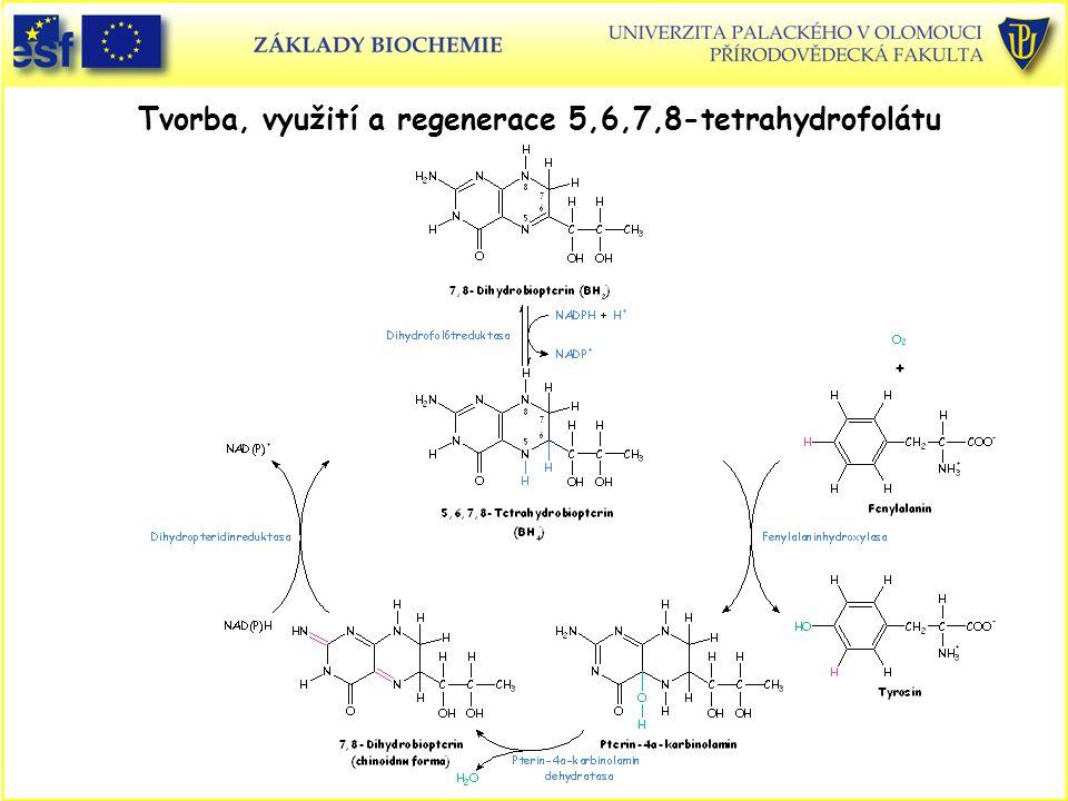 Tvorba, využití a regenerace 5,6,7,8-tetrahydrofolátu