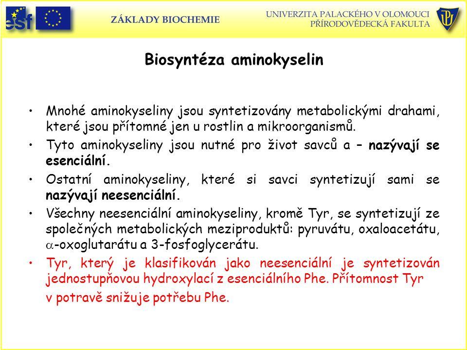 Biosyntéza aminokyselin Mnohé aminokyseliny jsou syntetizovány metabolickými drahami, které jsou přítomné jen u rostlin a mikroorganismů. Tyto aminoky