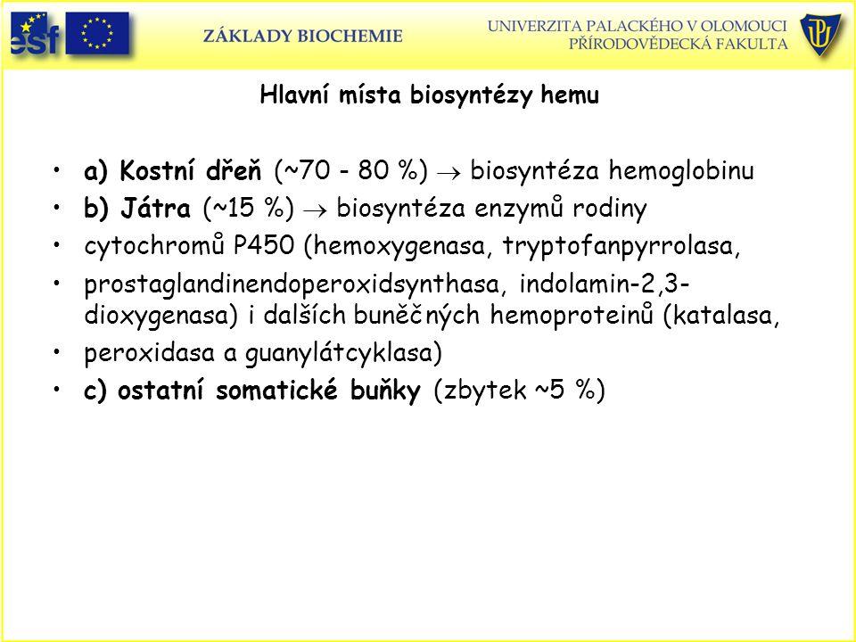 Hlavní místa biosyntézy hemu a) Kostní dřeň (~70 - 80 %)  biosyntéza hemoglobinu b) Játra (~15 %)  biosyntéza enzymů rodiny cytochromů P450 (hemoxyg