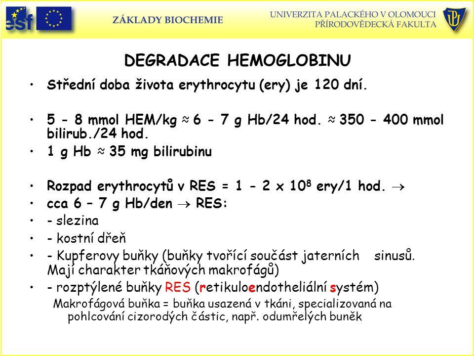 DEGRADACE HEMOGLOBINU Střední doba života erythrocytu (ery) je 120 dní. 5 - 8 mmol HEM/kg ≈ 6 - 7 g Hb/24 hod. ≈ 350 - 400 mmol bilirub./24 hod. 1 g H