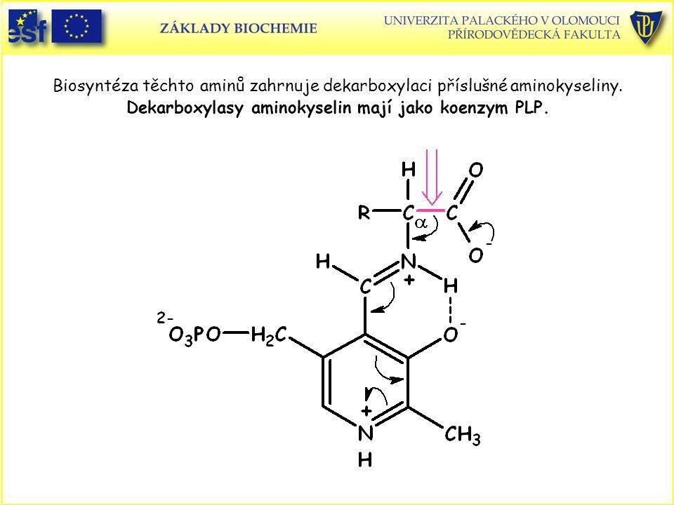 Biosyntéza těchto aminů zahrnuje dekarboxylaci příslušné aminokyseliny. Dekarboxylasy aminokyselin mají jako koenzym PLP.