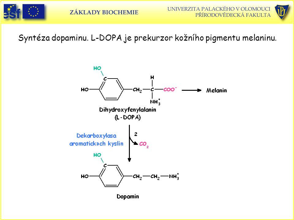 Syntéza dopaminu. L-DOPA je prekurzor kožního pigmentu melaninu.