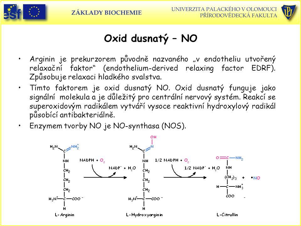 """Oxid dusnatý – NO Arginin je prekurzorem původně nazvaného """"v endotheliu utvořený relaxační faktor"""" (endothelium-derived relaxing factor EDRF). Způsob"""