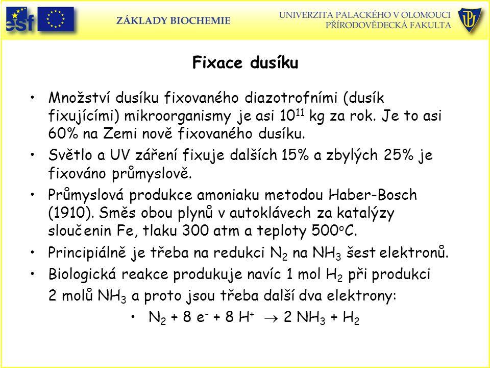 Fixace dusíku Množství dusíku fixovaného diazotrofními (dusík fixujícími) mikroorganismy je asi 10 11 kg za rok. Je to asi 60% na Zemi nově fixovaného