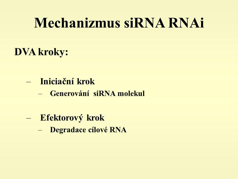 Mechanizmus siRNA RNAi DVA kroky: –Iniciační krok –Generování siRNA molekul –Efektorový krok –Degradace cílové RNA