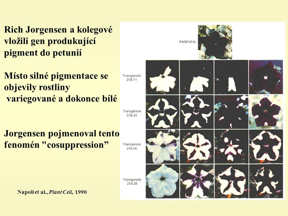 Napoli et al., Plant Cell, 1990 Rich Jorgensen a kolegové vložili gen produkující pigment do petunií Místo silné pigmentace se objevily rostliny variegované a dokonce bílé Jorgensen pojmenoval tento fenomén cosuppression