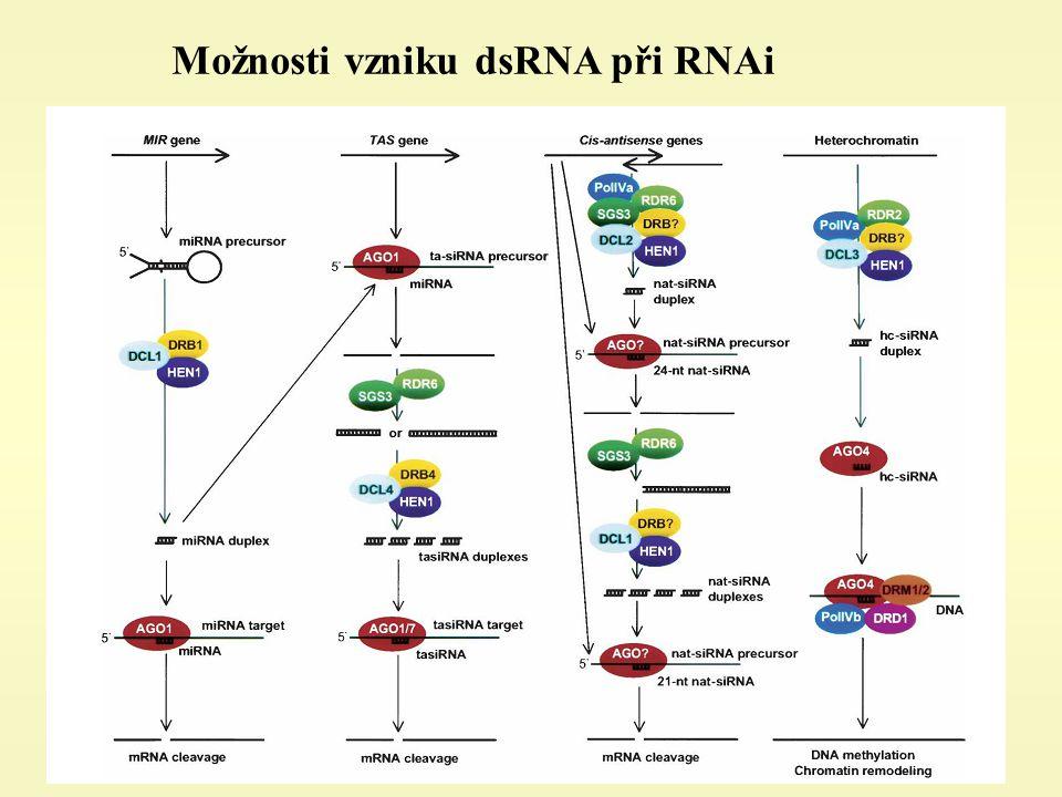 Možnosti vzniku dsRNA při RNAi