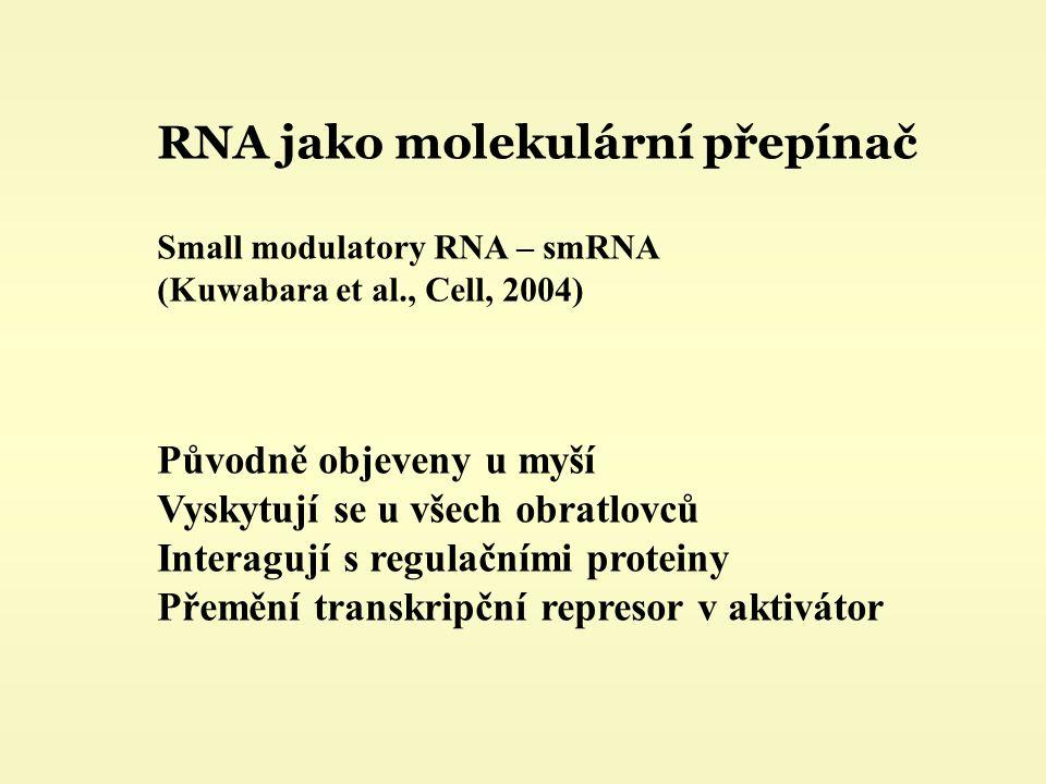 RNA jako molekulární přepínač Small modulatory RNA – smRNA (Kuwabara et al., Cell, 2004) Původně objeveny u myší Vyskytují se u všech obratlovců Interagují s regulačními proteiny Přemění transkripční represor v aktivátor
