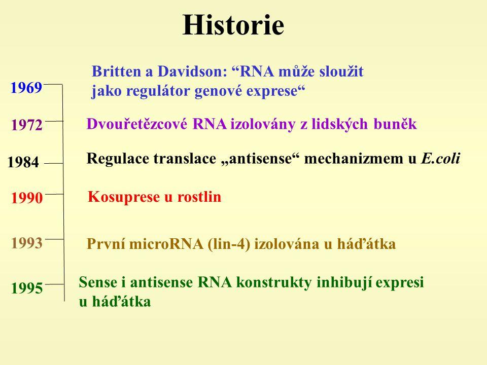 """Historie 1972 1990 1993 1995 1969 Britten a Davidson: RNA může sloužit jako regulátor genové exprese Dvouřetězcové RNA izolovány z lidských buněk Kosuprese u rostlin První microRNA (lin-4) izolována u háďátka Sense i antisense RNA konstrukty inhibují expresi u háďátka 1984 Regulace translace """"antisense mechanizmem u E.coli"""