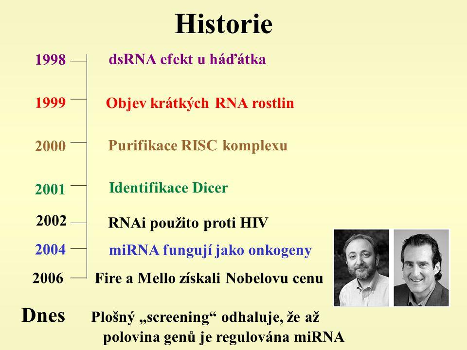 """Historie 1998 1999 2000 2001 2002 dsRNA efekt u háďátka Purifikace RISC komplexu Identifikace Dicer RNAi použito proti HIV Dnes Plošný """"screening odhaluje, že až polovina genů je regulována miRNA 2004 2006 Fire a Mello získali Nobelovu cenu miRNA fungují jako onkogeny Objev krátkých RNA rostlin"""