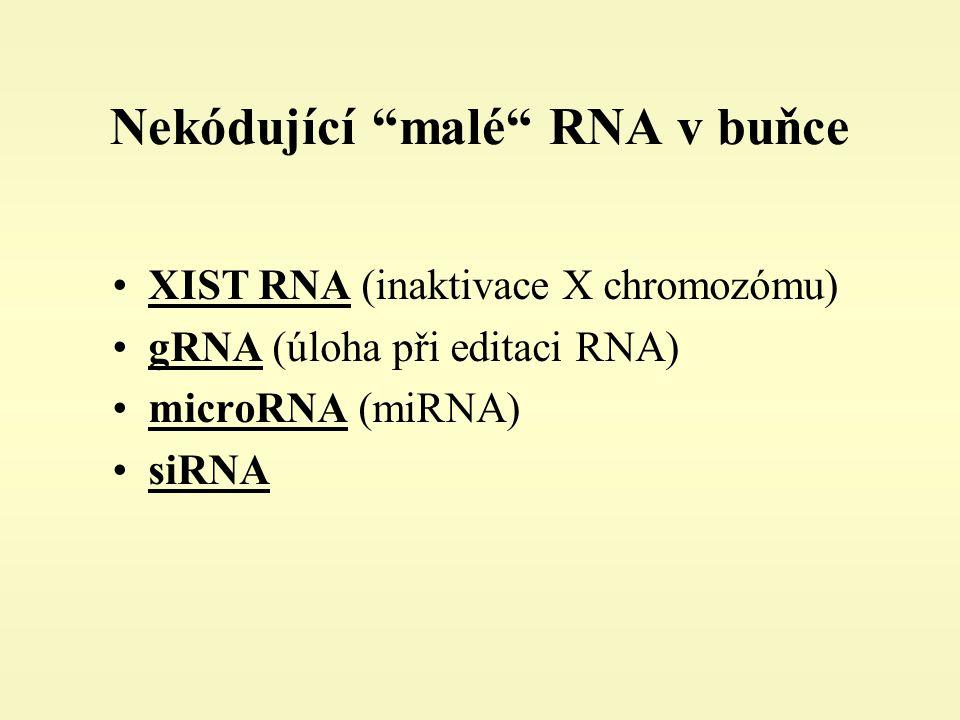 Nekódující malé RNA v buňce XIST RNA (inaktivace X chromozómu) gRNA (úloha při editaci RNA) microRNA (miRNA) siRNA