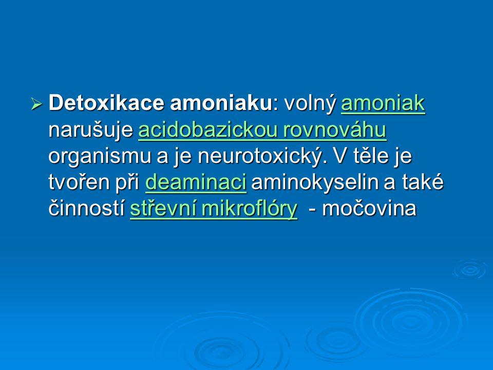  Detoxikace amoniaku: volný amoniak narušuje acidobazickou rovnováhu organismu a je neurotoxický. V těle je tvořen při deaminaci aminokyselin a také