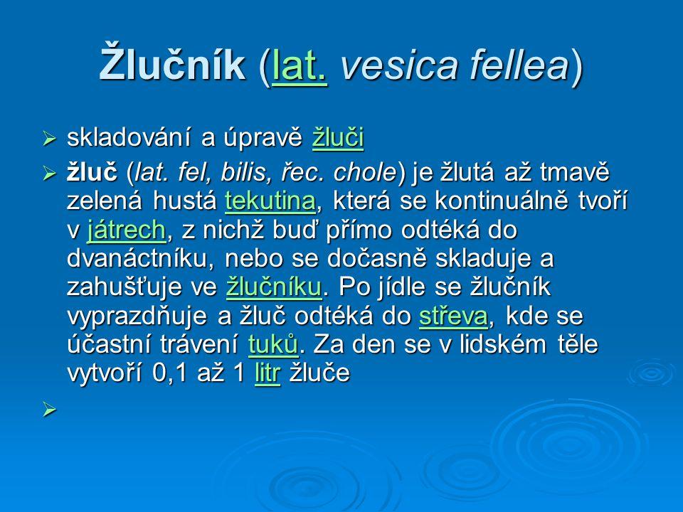 Žlučník (lat. vesica fellea) lat.  skladování a úpravě žluči žluči  žluč (lat. fel, bilis, řec. chole) je žlutá až tmavě zelená hustá tekutina, kter