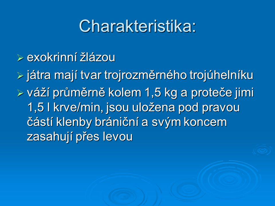 Charakteristika:  exokrinní žlázou  játra mají tvar trojrozměrného trojúhelníku  váží průměrně kolem 1,5 kg a proteče jimi 1,5 l krve/min, jsou ulo