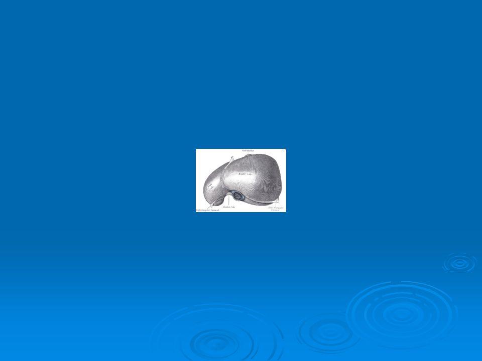  Detoxikace amoniaku: volný amoniak narušuje acidobazickou rovnováhu organismu a je neurotoxický.
