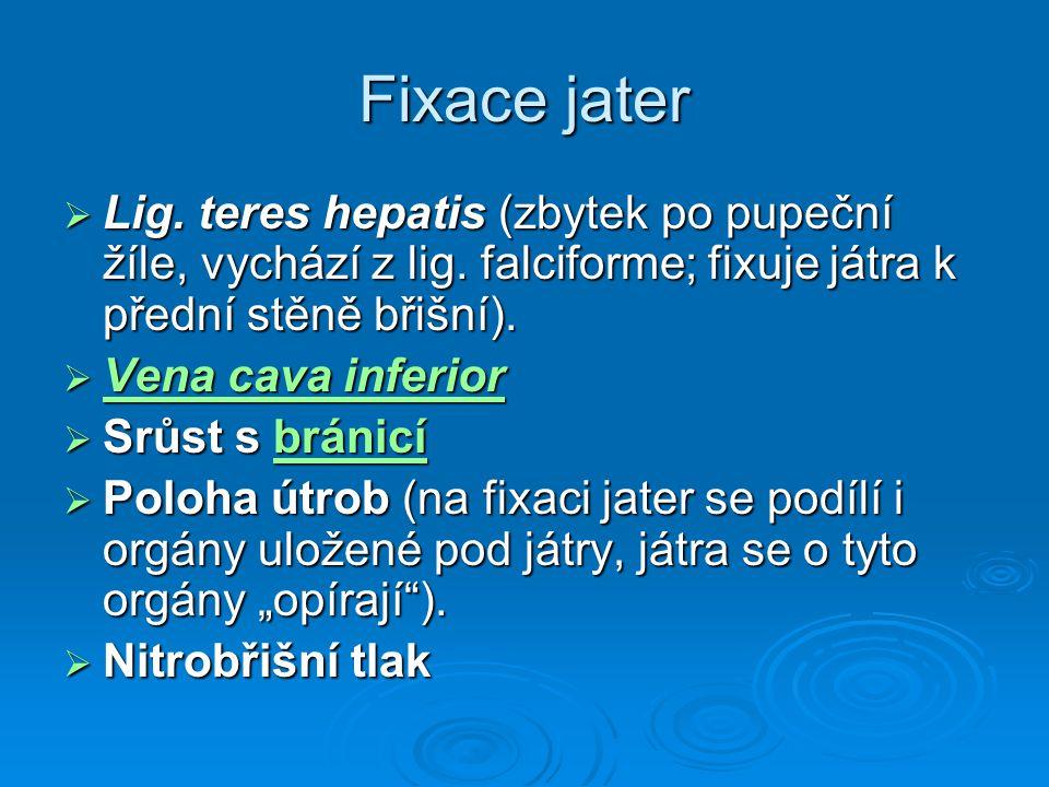 Fixace jater  Lig. teres hepatis (zbytek po pupeční žíle, vychází z lig. falciforme; fixuje játra k přední stěně břišní).  Vena cava inferior Vena c
