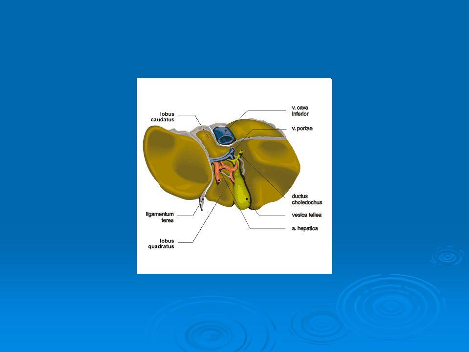 Žlučník (lat.vesica fellea) lat.  skladování a úpravě žluči žluči  žluč (lat.