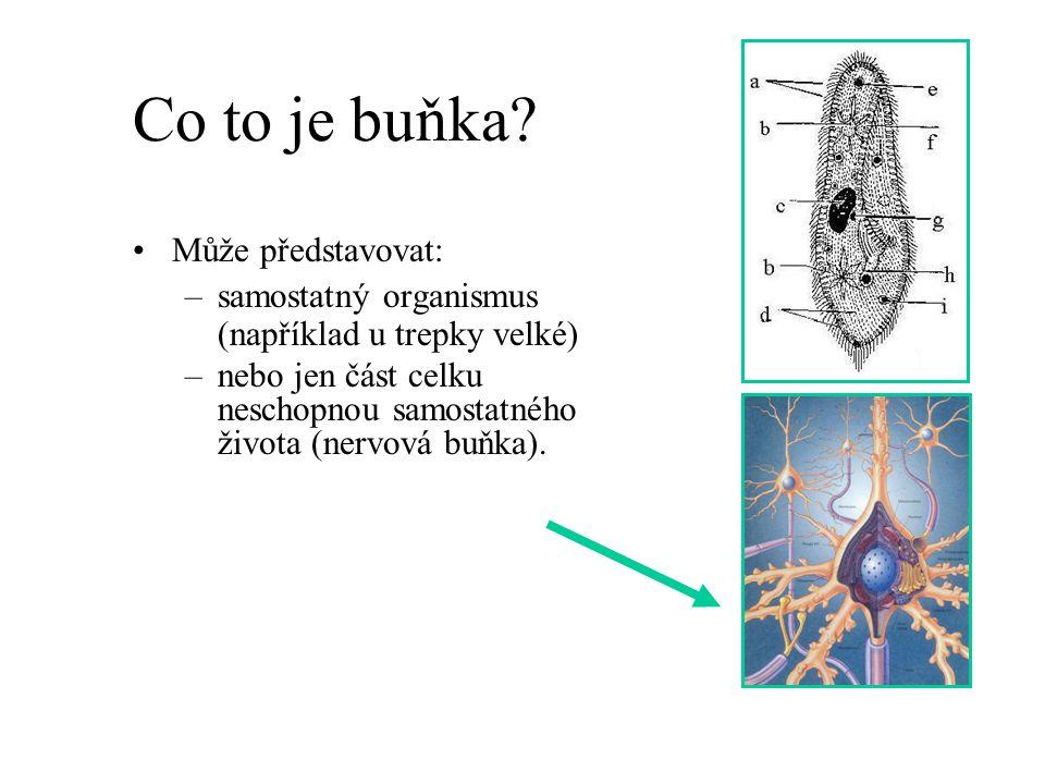 Eukaryota a prokaryota Prokaryota, z řeckého pro (před) a karyon (jádro), je označení pro evolučně staré organismy.