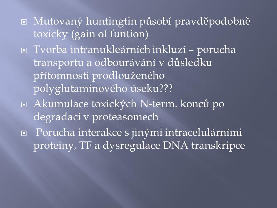  Mutovaný huntingtin působí pravděpodobně toxicky (gain of funtion)  Tvorba intranukleárních inkluzí – porucha transportu a odbourávání v důsledku přítomnosti prodlouženého polyglutaminového úseku??.