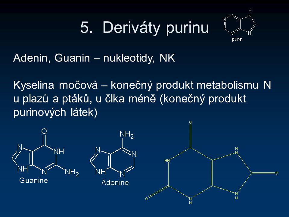 5. Deriváty purinu Adenin, Guanin – nukleotidy, NK Kyselina močová – konečný produkt metabolismu N u plazů a ptáků, u člka méně (konečný produkt purin