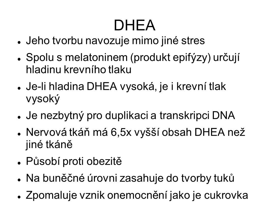 DHEA Jeho tvorbu navozuje mimo jiné stres Spolu s melatoninem (produkt epifýzy) určují hladinu krevního tlaku Je-li hladina DHEA vysoká, je i krevní tlak vysoký Je nezbytný pro duplikaci a transkripci DNA Nervová tkáň má 6,5x vyšší obsah DHEA než jiné tkáně Působí proti obezitě Na buněčné úrovni zasahuje do tvorby tuků Zpomaluje vznik onemocnění jako je cukrovka