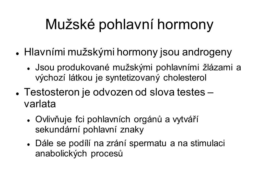 Mužské pohlavní hormony Hlavními mužskými hormony jsou androgeny Jsou produkované mužskými pohlavními žlázami a výchozí látkou je syntetizovaný cholesterol Testosteron je odvozen od slova testes – varlata Ovlivňuje fci pohlavních orgánů a vytváří sekundární pohlavní znaky Dále se podílí na zrání spermatu a na stimulaci anabolických procesů