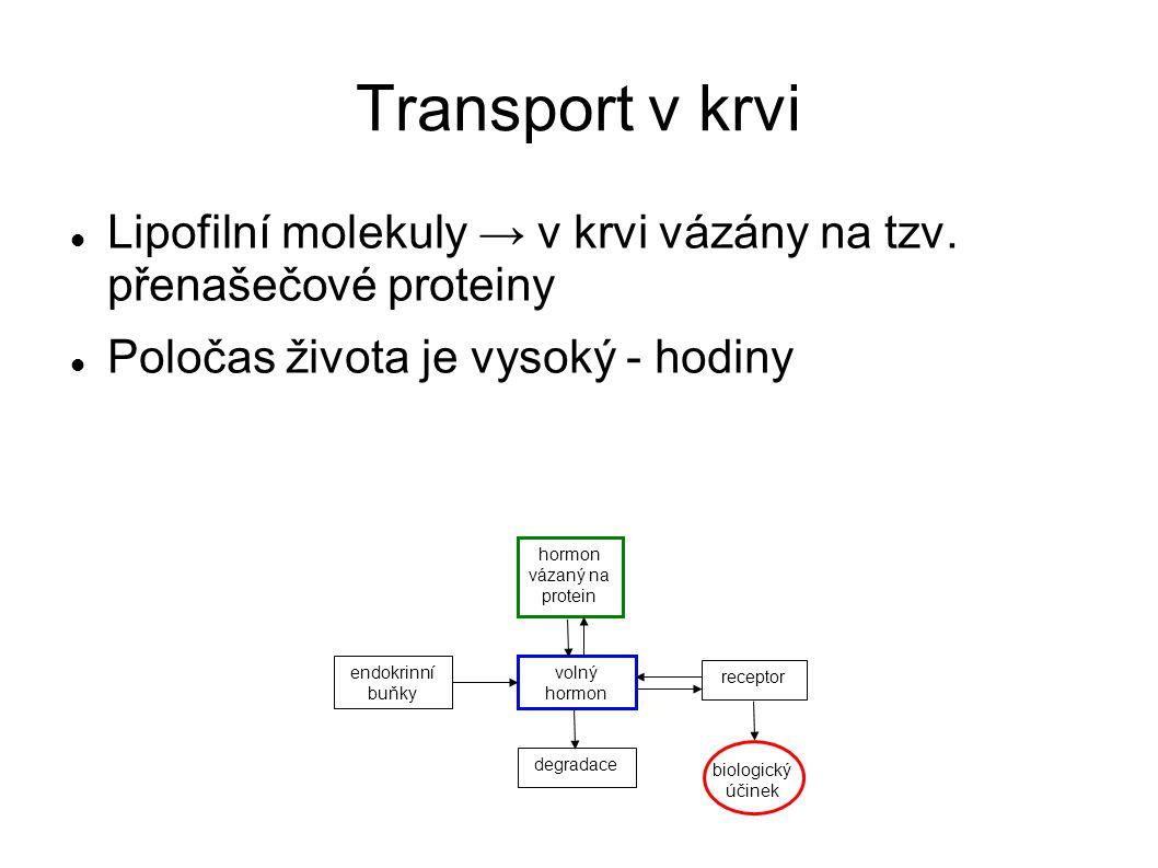 Působení v těle Snadno procházejí membránou Váží se na receptory Ve dvojici s receptory může mít přepisovací schopnost V případě aktivace dochází k syntéze proteinů, které pak působí v těle Účinky nastupují pomaleji a trvají déle