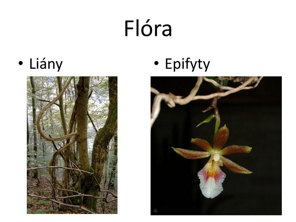 Flóra Liány Epifyty