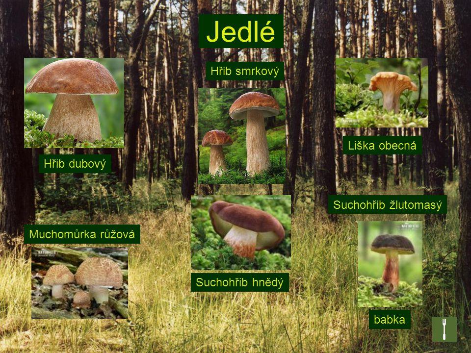 Druhy hub Houby se liší svou velikostí, tvarem i zbarvením.