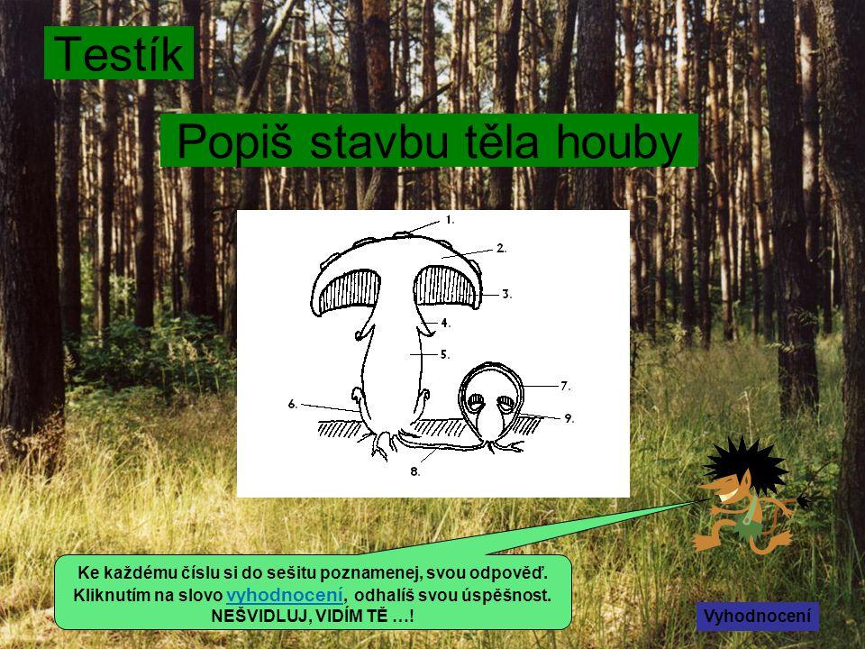 Zásady správného houbaření Sbíráme houby do igelitky.