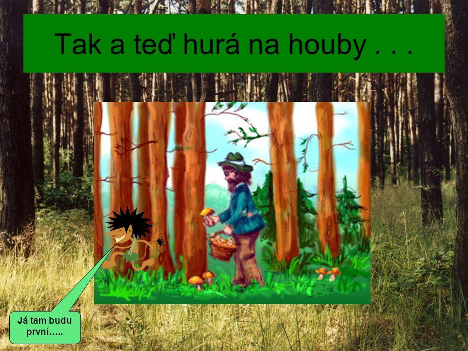 Jaké zásady houbaření znáš? Jak se chováš v lese a proč? To už přece znáš !!!