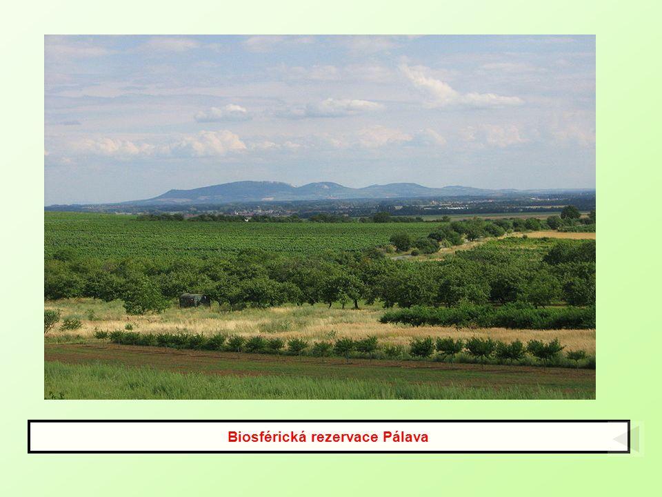 Biosférická rezervace Pálava