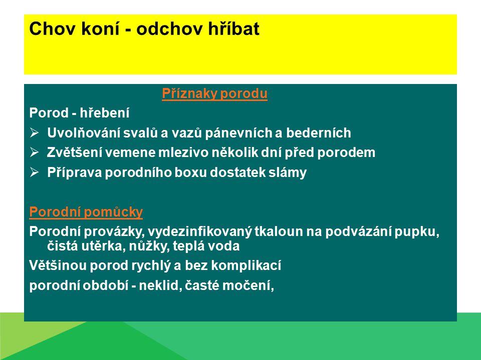 Chov koní - odchov hříbat  Vypuzovací 15-20 min.