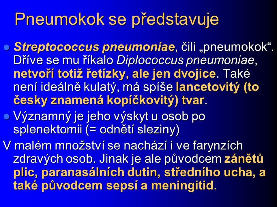 """Pneumokok se představuje Streptococcus pneumoniae, čili """"pneumokok"""". Dříve se mu říkalo Diplococcus pneumoniae, netvoří totiž řetízky, ale jen dvojice"""
