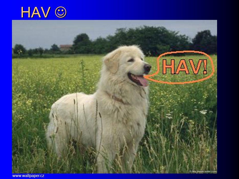 HAV HAV www.wallpaper.cz