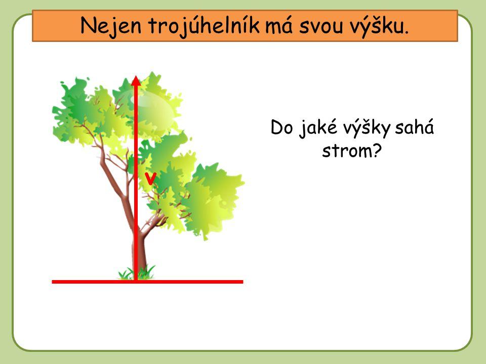DD Nejen trojúhelník má svou výšku. v Do jaké výšky sahá strom