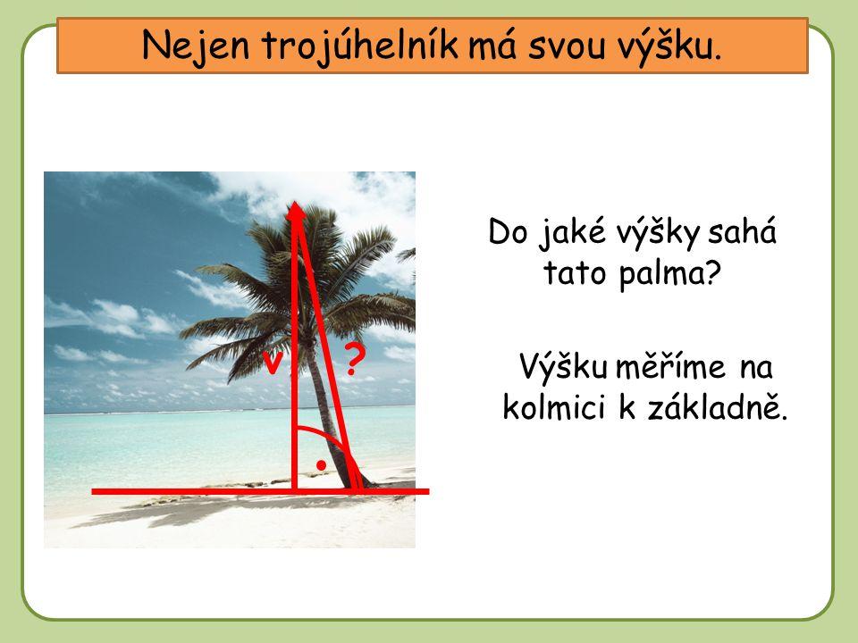 DD Nejen trojúhelník má svou výšku. v Do jaké výšky sahá tato palma.