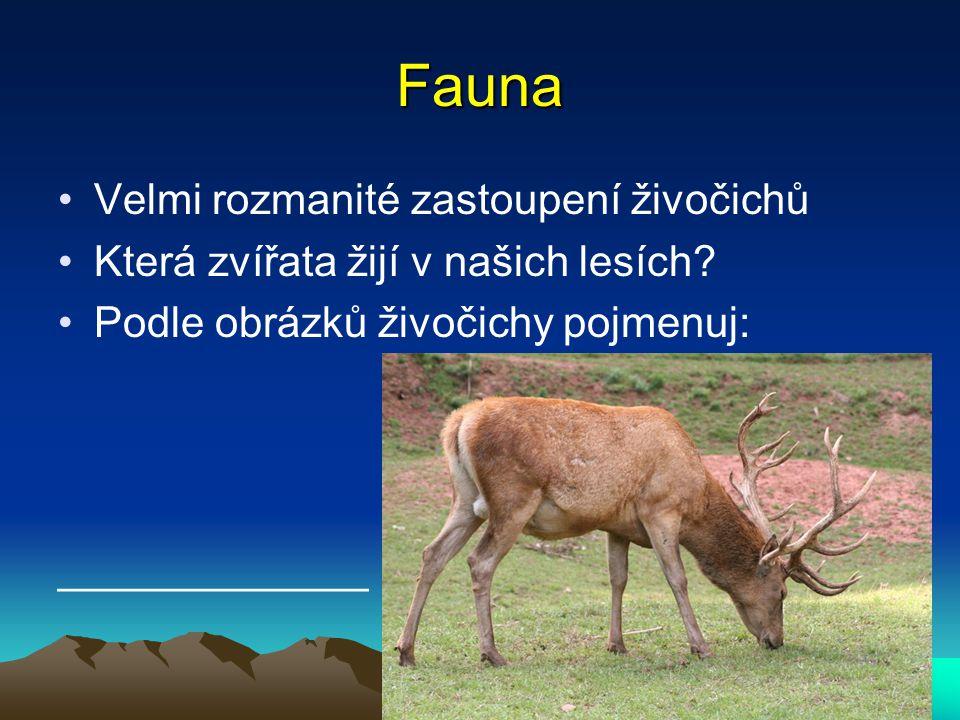 Fauna Velmi rozmanité zastoupení živočichů Která zvířata žijí v našich lesích? Podle obrázků živočichy pojmenuj: _____________