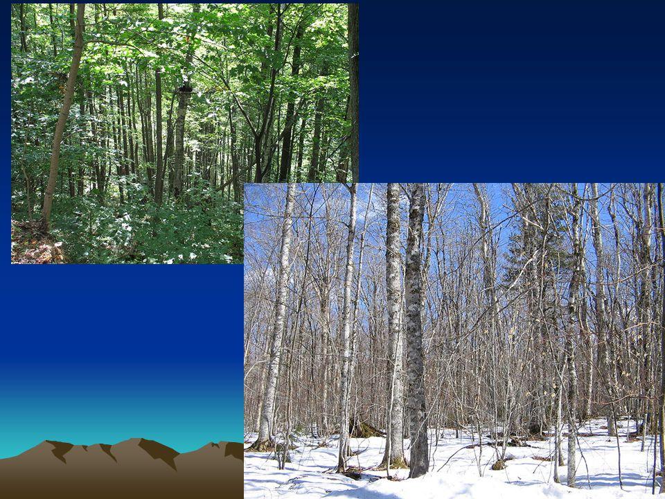 Fauna Velmi rozmanité zastoupení živočichů Která zvířata žijí v našich lesích.