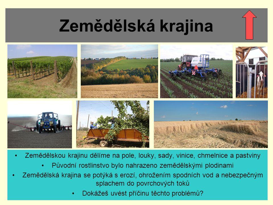 Zemědělská krajina Zemědělskou krajinu dělíme na pole, louky, sady, vinice, chmelnice a pastviny Původní rostlinstvo bylo nahrazeno zemědělskými plodinami Zemědělská krajina se potýká s erozí, ohrožením spodních vod a nebezpečným splachem do povrchových toků Dokážeš uvést příčinu těchto problémů?