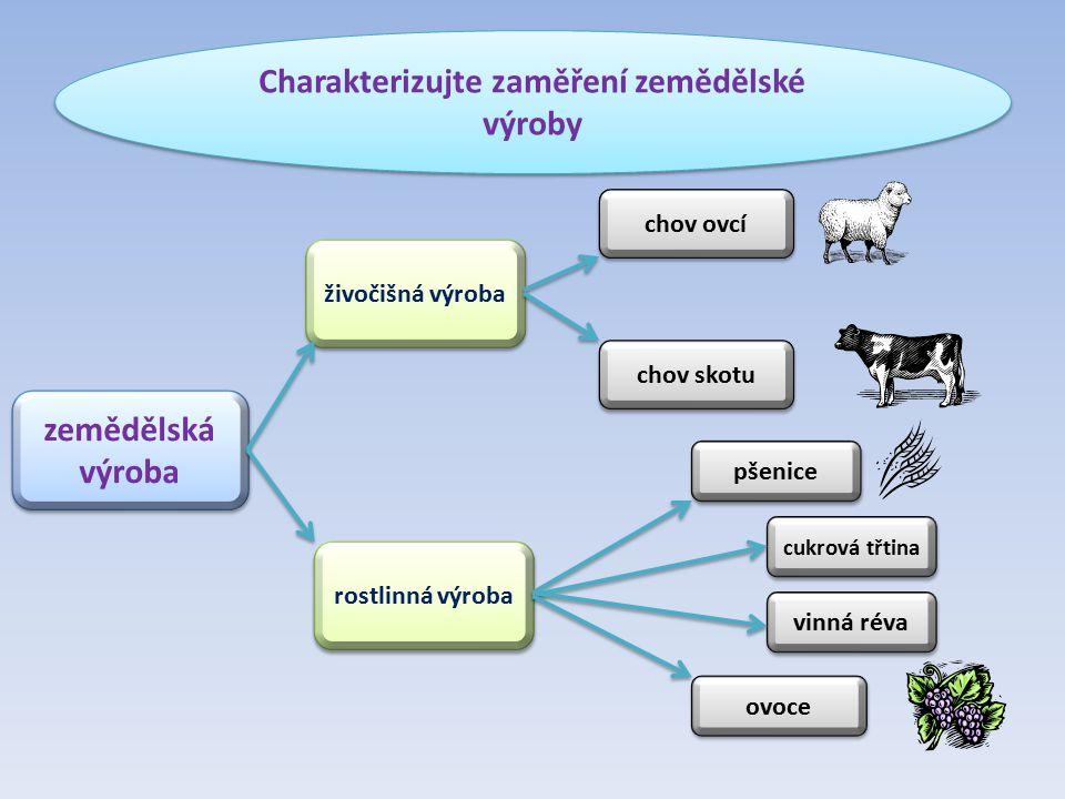 Charakterizujte zaměření zemědělské výroby zemědělská výroba rostlinná výroba živočišná výroba chov ovcí chov skotu pšenice cukrová třtina vinná réva ovoce