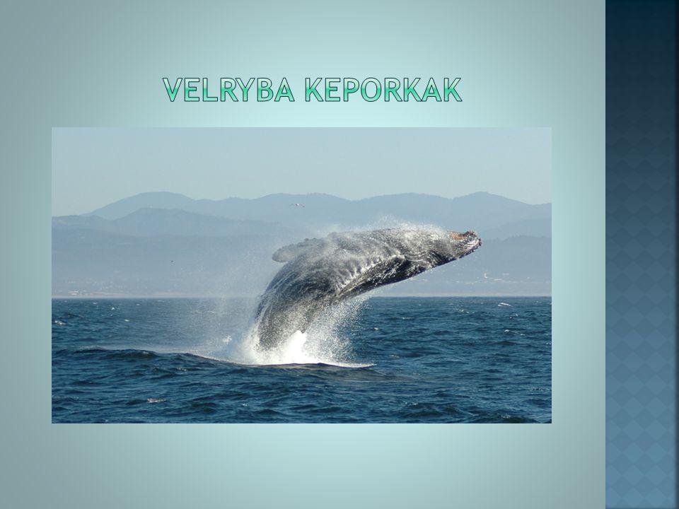 Kytovci (delfíni a velryby) jsou odkázáni ve svém prostředí pouze na sluch.