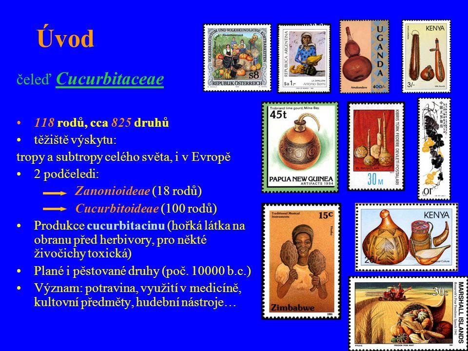 čeleď Cucurbitaceae 118 rodů, cca 825 druhů těžiště výskytu: tropy a subtropy celého světa, i v Evropě 2 podčeledi: Zanonioideae (18 rodů) Cucurbitoid