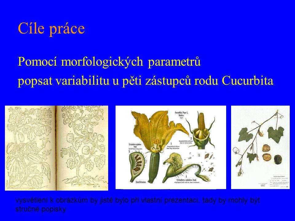Cíle práce Pomocí morfologických parametrů popsat variabilitu u pěti zástupců rodu Cucurbita vysvětlení k obrázkům by jistě bylo při vlastní prezentaci, tady by mohly být stručné popisky