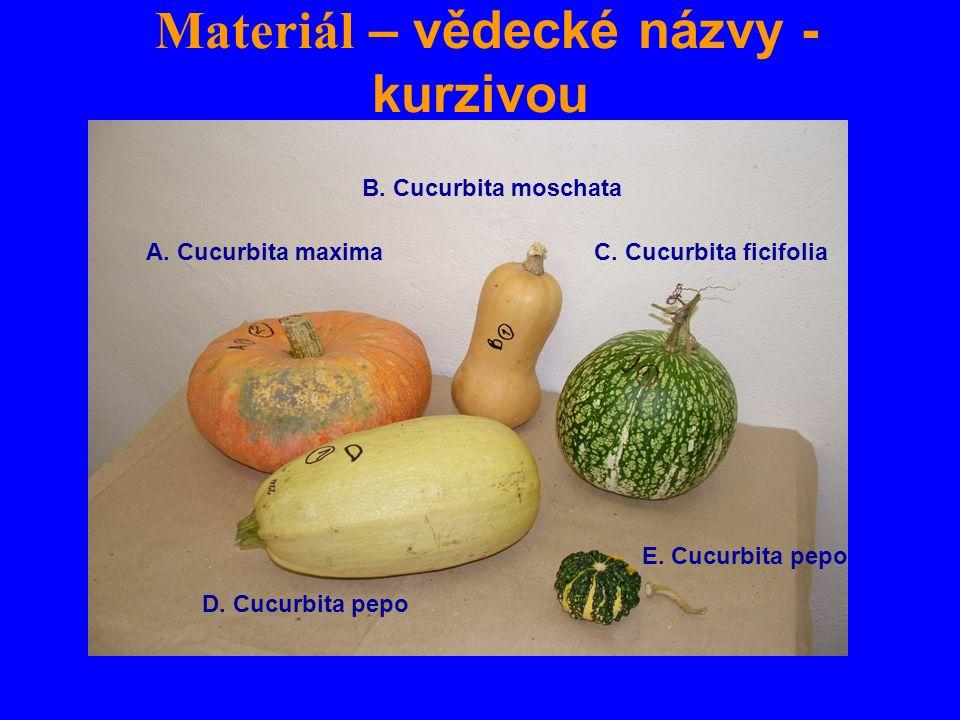 Materiál – vědecké názvy - kurzivou A. Cucurbita maxima B. Cucurbita moschata C. Cucurbita ficifolia D. Cucurbita pepo E. Cucurbita pepo