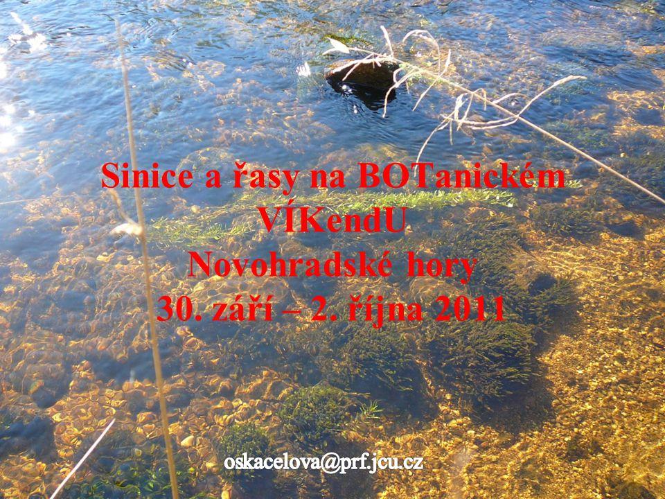 Rybníček pod penzionem Žofín zelený vegetační zákal